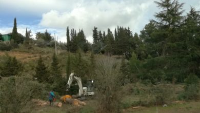 Photo of Tagliati gli alberi all'ingresso di Pergusa. Insorgono i cittadini