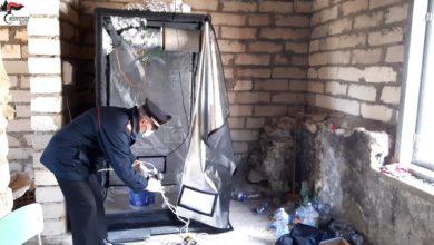 Photo of Barrafranca e Pietraperzia: Rinvenuto in un casolare abbandonato una grow box per la produzione di droga