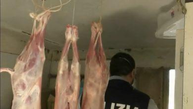 Photo of Polizia deferisce all'A.G allevatore per macellazione abusiva e detenzione di animali privi dei marchi identificativi