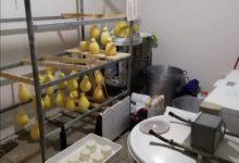 Photo of Caseificio abusivo a Nicosia: sequestrati 50 kg di prodotti