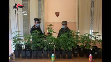 Photo of Piazza Armerina: arrestato due volte in 24h per coltivazione illecita di sostanze stupefacenti